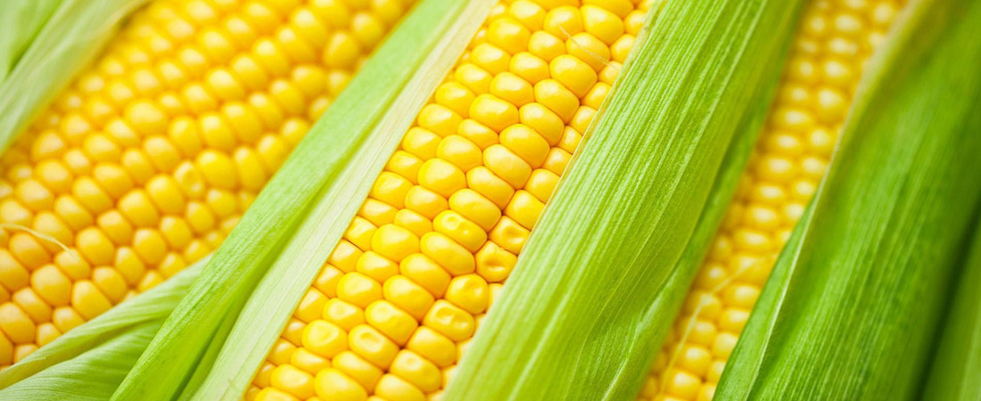2016 Annual Corn Roast